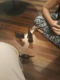 Estou doando 3 gatinhos(as)