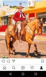 Cavalo gateado à venda