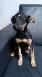 Doação urgente:filhote de cachorro