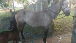 Égua boa de picado com a poutra!!