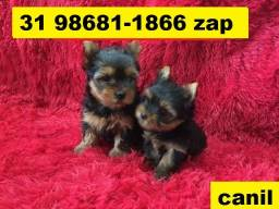 Canil Filhotes BH Yorkshire Shihtzu Beagle Basset Poodle Lhasa Maltês Fox