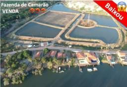 Vendo Fazenda de Camarão Completa em Funcionamento - Água Salgada - Aracati-CE