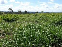 Fazenda para gado em Mirador-Ma