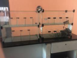 Bomboniere expositora (vidro)