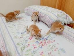 Doa-se gatinhos lindos