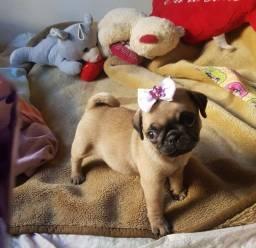 Pug fêmea com pedigree e vacinada 12x 178,00