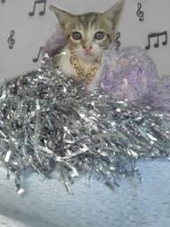 Doação linda gatinha filhote fêmea