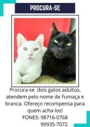 Gatos Desaparecidos