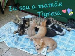 Doam-se lindos gatinhos da mamãe Tigresa