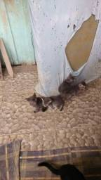 Lindos gatinhos pra doaçao ja estao comendo raçao