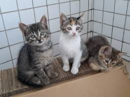 Gatinhos para adoção responsável, vacinados!
