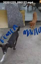 Doação de pets