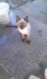 Doação de gato 3 meses