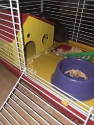 Gaiola completa + hamster fêmea e 6 filhotes