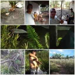 Vendo ou troco belissima fazendinha de 6.5 hectares escriturada