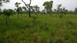 Fazenda 1300 hectares em Araguaina-Tocantins
