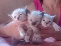 Doa -se filhotes de Gatinhos