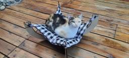 Cama Rede com suporte para gatos