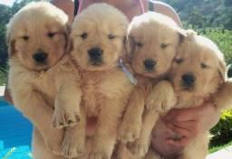 Golden FÊMEA  Temos bebês a pronta entrega e varias promoções, corre!