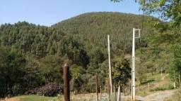 Eucaliptos Saligna - 7 alqueires - Arvores com 8-9 anos - Cidade de Guapiara
