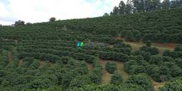 Fazenda à venda - 40 hectares - machado (mg)