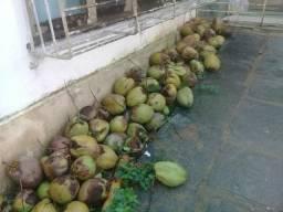 Vendo cocos verde maduro