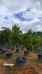 Plantas frutíferas, ornamentais e florestais