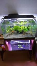2 aquários completos + acessórios