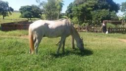 Troco cavalo de carroça por cavalo de sela