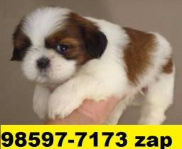 Canil Filhotes Cães BH Shihtzu Maltês Beagle Basset Poodle Lhasa Yorkshire Pug