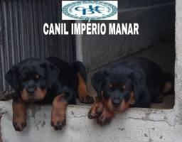 Rottweiler com pedigree CBKC(em até 12x)