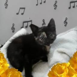 Doação linda gatinha escaminha filhote.