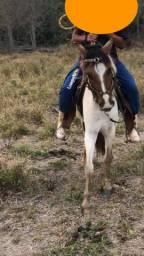 Égua pampa machadeira