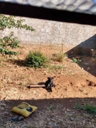 pitbull fêmea castrada e vacinada (1 ano)