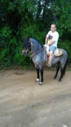 Cavalo inteiro rosilho mouro,registradoecom medidas para marcar