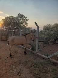 Vendo mulas