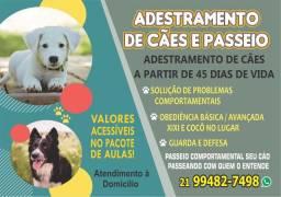 ADESTRAMENTO DE CÃES A PARTIR DE 45 DIAS