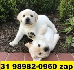 Canil-Filhotes Cães BH Labrador Golden Pastor Akita Rottweiler Labrador Dálmatas Boxer