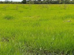 Fazenda em Teixeira de Freitas.