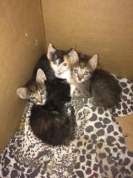 Doa-se filhotes de gatinhos lindos