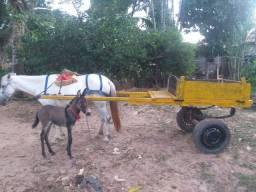 Vendo égua encarroçada  com burinha  no valor de 3.200