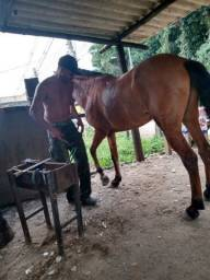 Cavalo manga larga