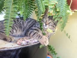 Gatinhos p adoção