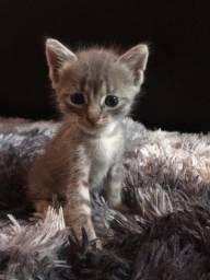 Estou doando gatos