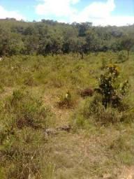 Vendo terra para criação de gado