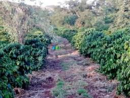 Fazenda - 56 hectares - região lavras (mg)