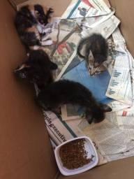 Doa-se filhotes de gatinhos sou de jales