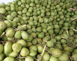 Coco verde unidade por R$0,65