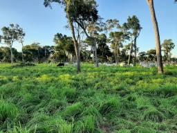 Fazenda 500 ha em Poconé Mato Grosso