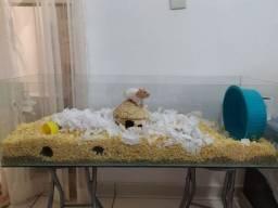 Terrário para roedores - aceito cartão